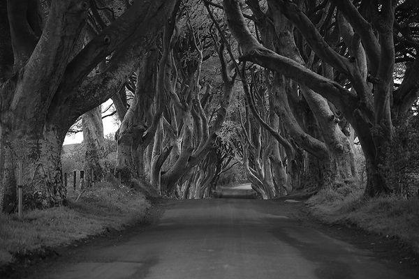 Irlandreise 2015...315