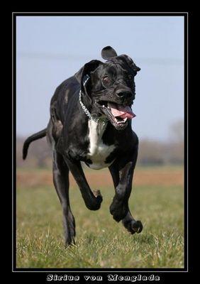 Irrer Blick - irrer Hund