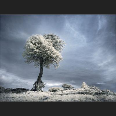 IRrer Traum-Baum