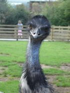Irwin the Emu