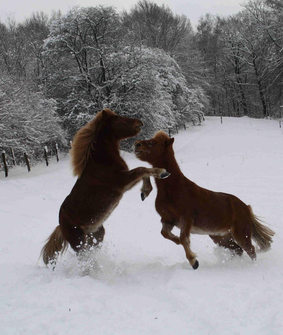 Isis beim Toben im Schnee
