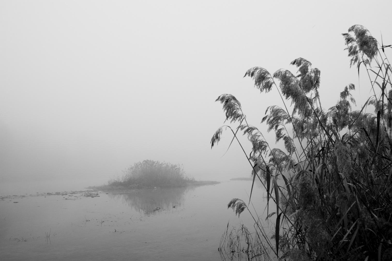 Isla en la niebla