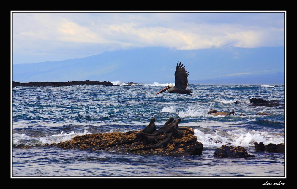 ISLA FERNANDINA-GALAPAGOS