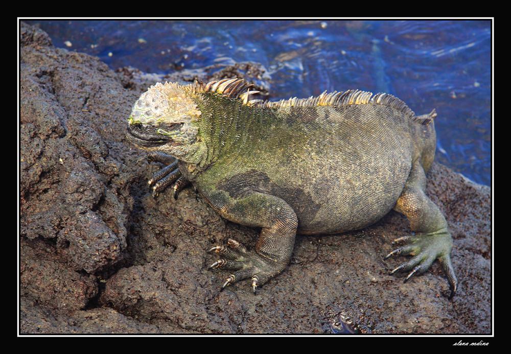 Isla Fernandina-Galapagos l