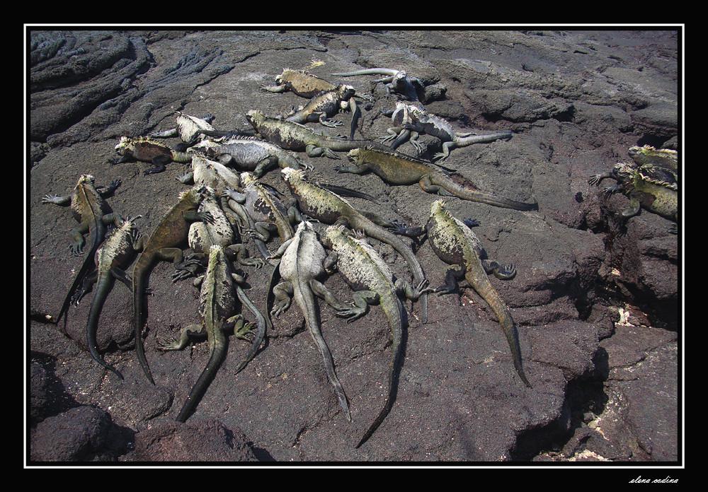Isla Fernandina-Galapagos ll