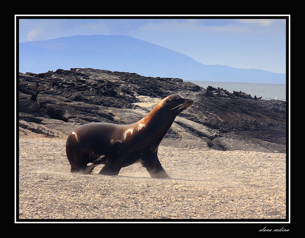 Isla Fernandina-Galapagos lll