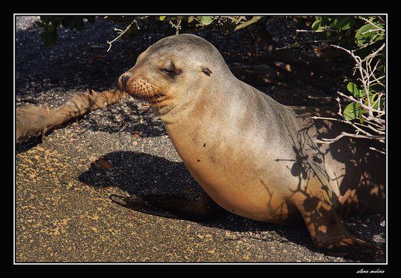 Isla Fernandina-Galapagos lV