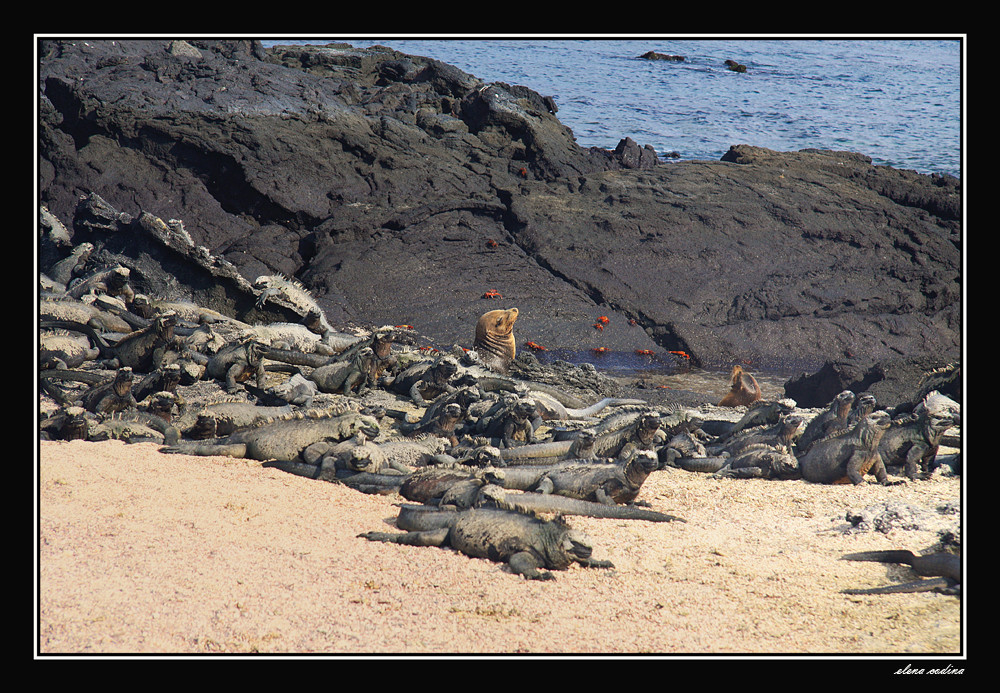 Isla Fernandina-Galapagos Vlll
