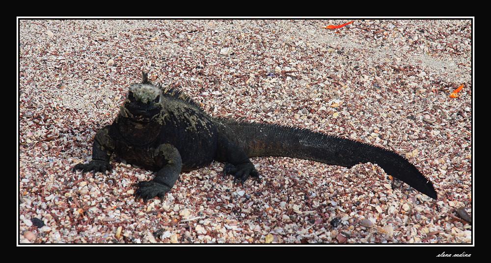 Isla Fernandina-Galapagos x