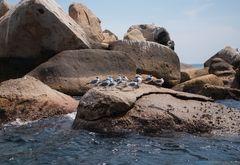 Isla Roqueta I