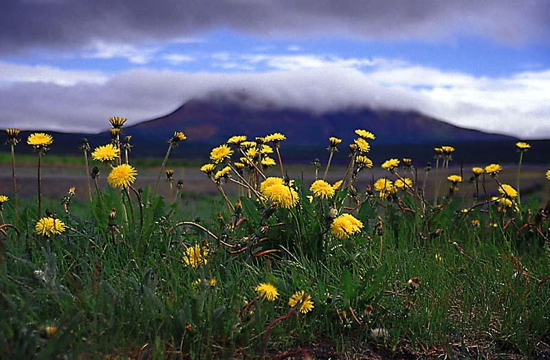 Island - Am Wegesrand
