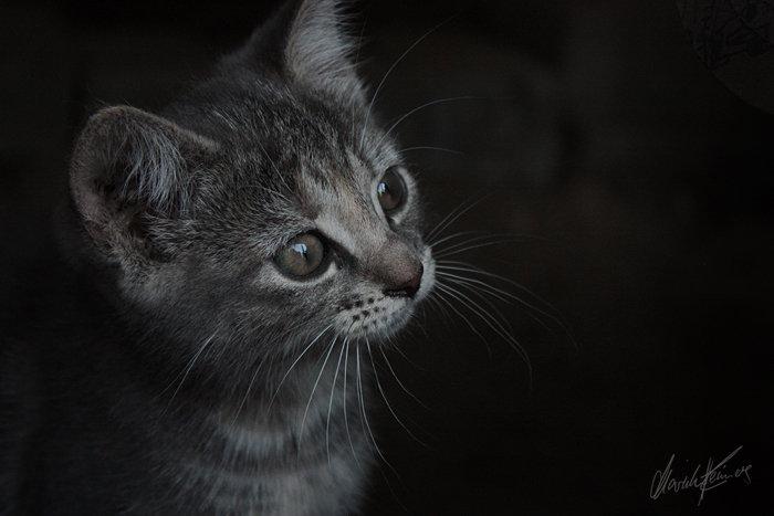 Island die Katze