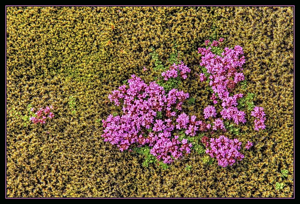 Island Flowers...