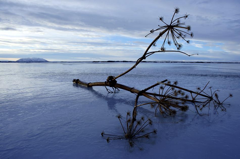 Island im Winter – Eisiger Myvaten See ohne Mücken: