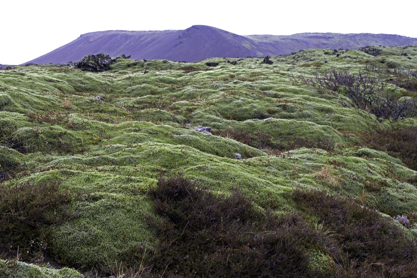 Island Januar 2011