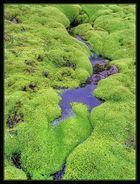 Island Moos