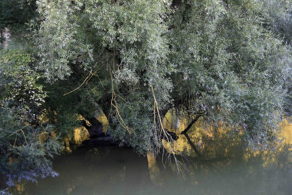 [island world of trees] (1)