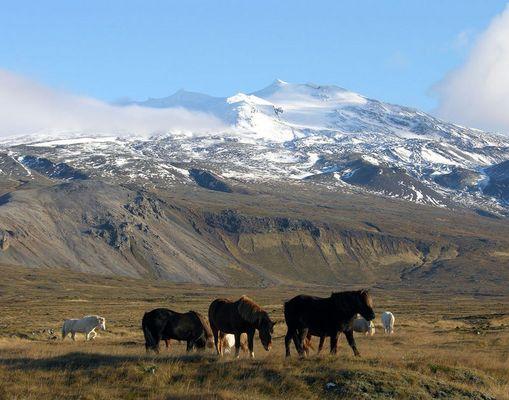 Islandpferde vorm Snaefellsjökull
