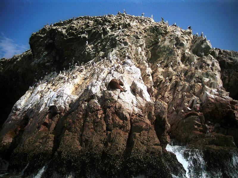 Islas Ballestas 1