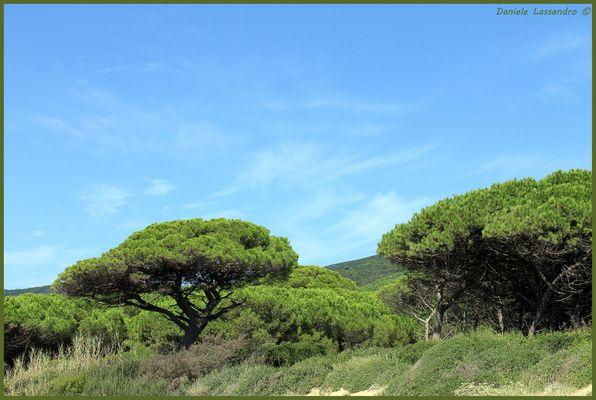Isola d'Elba - pineta
