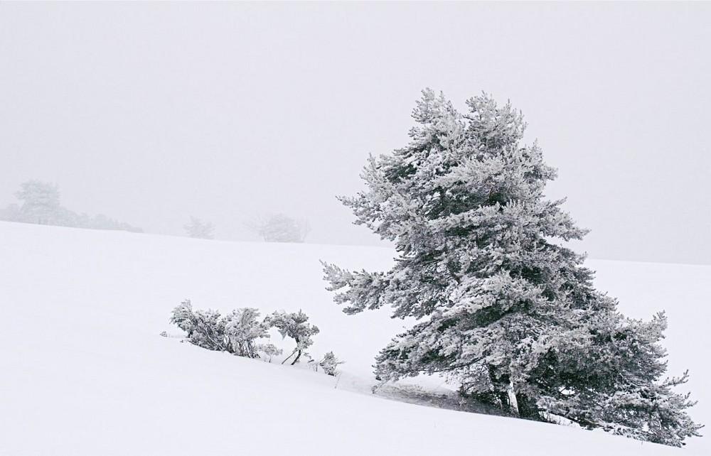 Isolé dans la tempête de neige