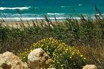 Israel im Norden, Mittelmeer