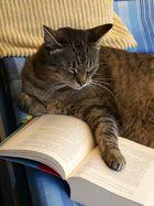 Ist das Buch laaaangweilig. Ich schlaf gleich ein.