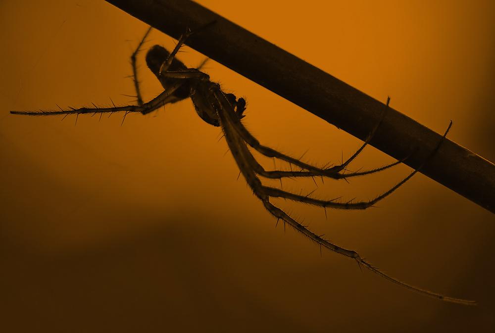 Ist das ein Spider, man ! :-)