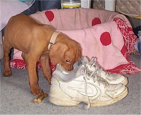 Ist das Frauli's Schuhe??