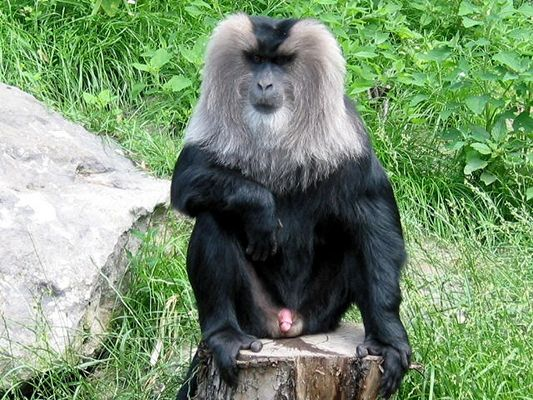 Ist das hier das Affen FKK