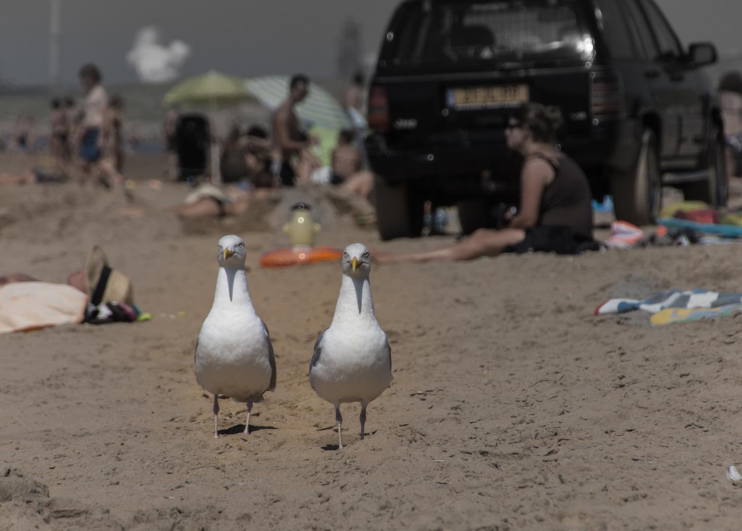 """""""Ist das nicht eigentlich unser Strand?"""" - Bloemendaal aan Zee/Niederlande"""