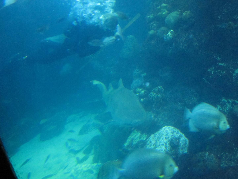 ist das unter mir ein Hai.....