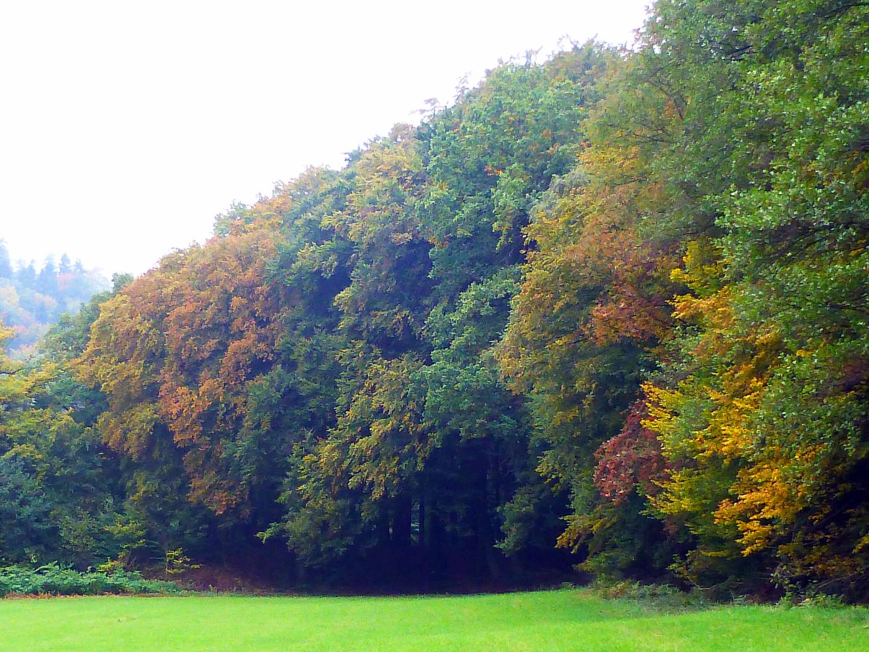Ist der Herbst nicht toll?