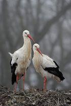 Ist der Storch im Frühling schmutzig, wird der Sommer nass.