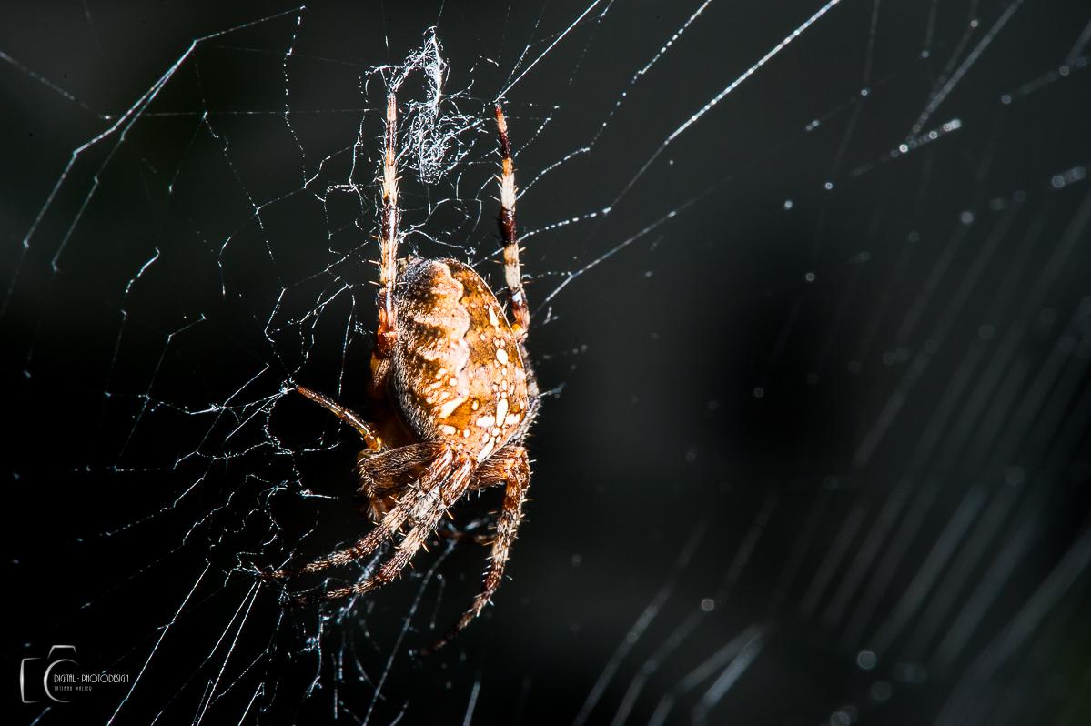 Ist hier die Arachnophobie erlaubt?