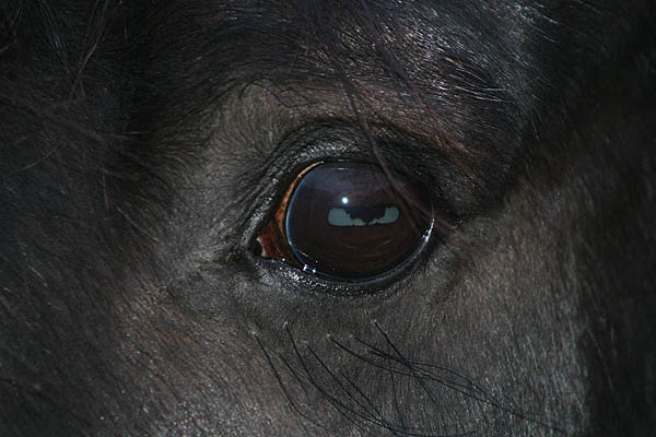 Ist mein Auge nicht schön...?