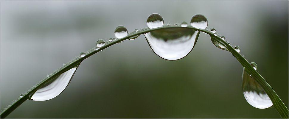 Ist Regen im Frühling denn nicht auch gut und schön ?