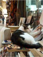 Istanbul 8 - die Bücherkatze