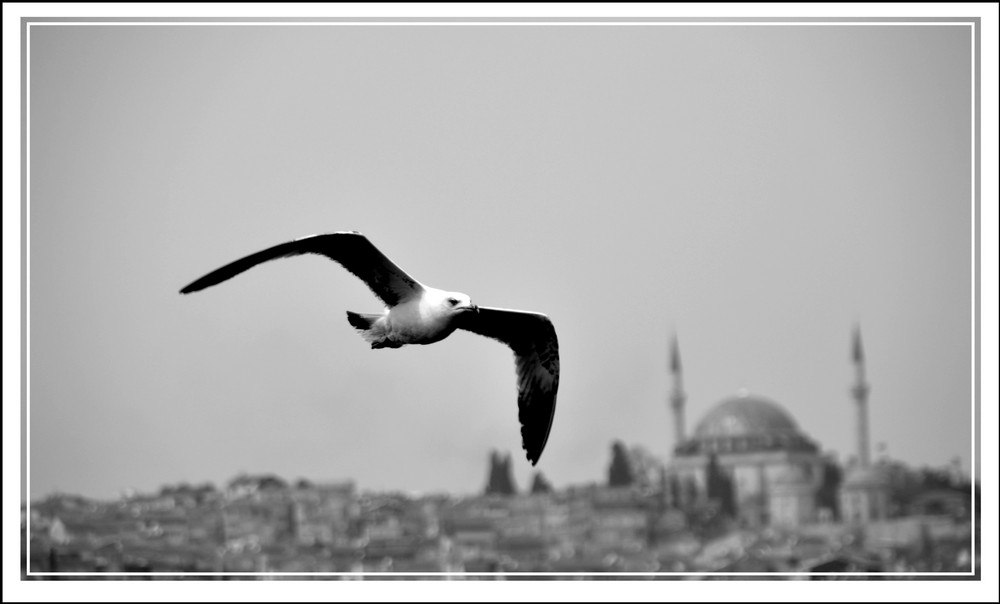 Istanbul Im Vogelblick