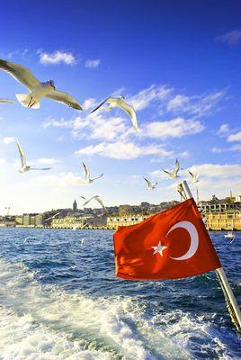 Istanbulun Martilari