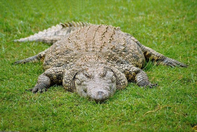 It's a Croc's World