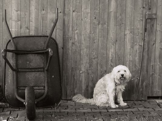 It´s a Dogs Life