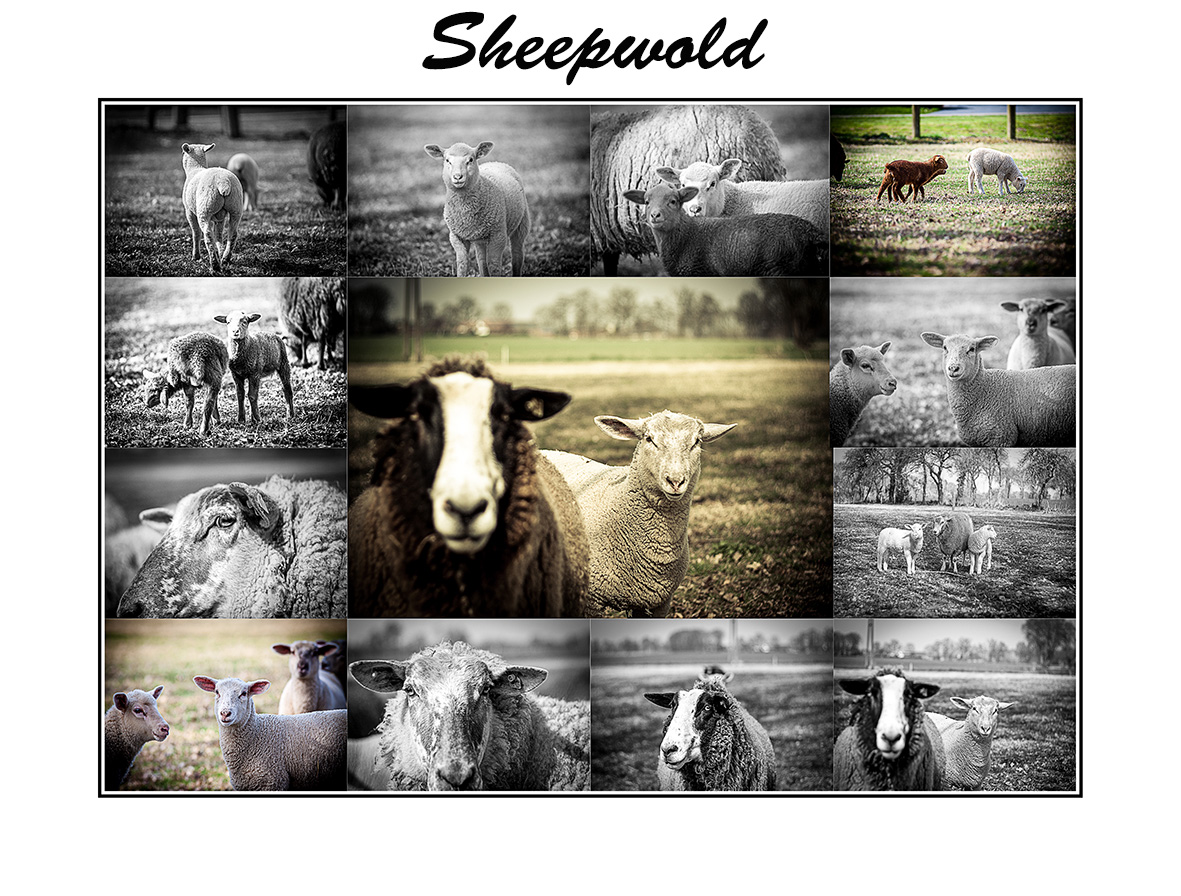 Its a Sheep World