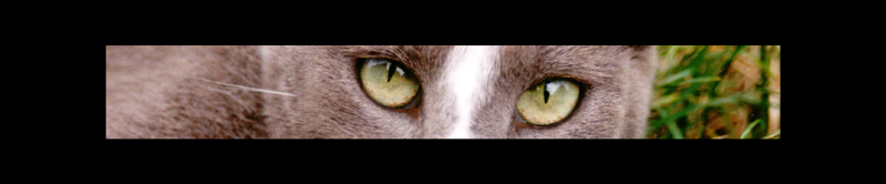 it´s in your eyes