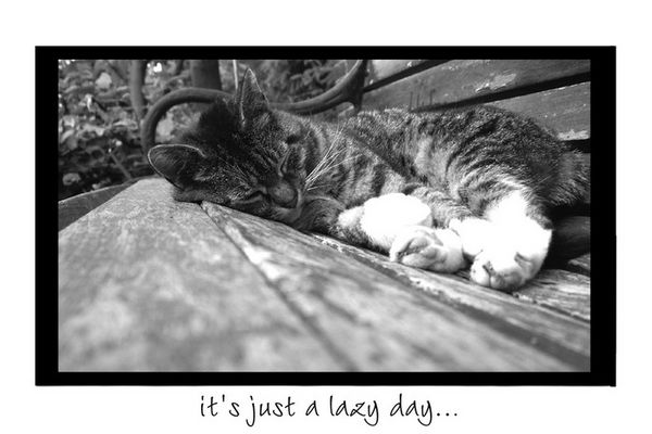 °° It's just a lazy day °°
