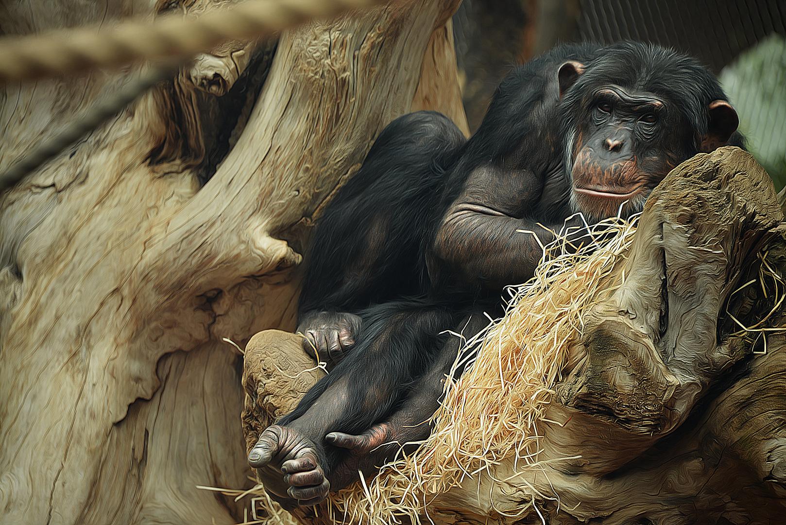 Its just a monkey