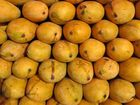 It's Mango season...