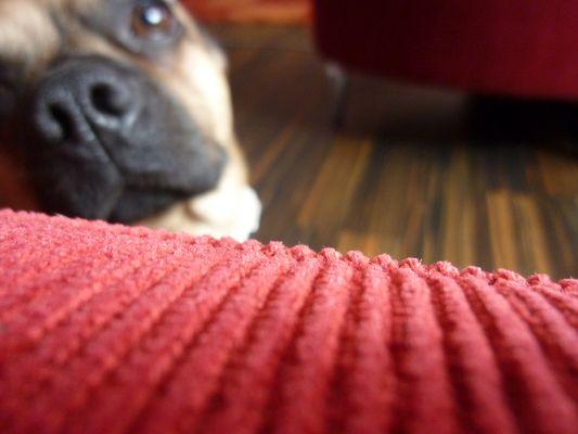 It's me, dog :)