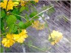 it´s raining again II
