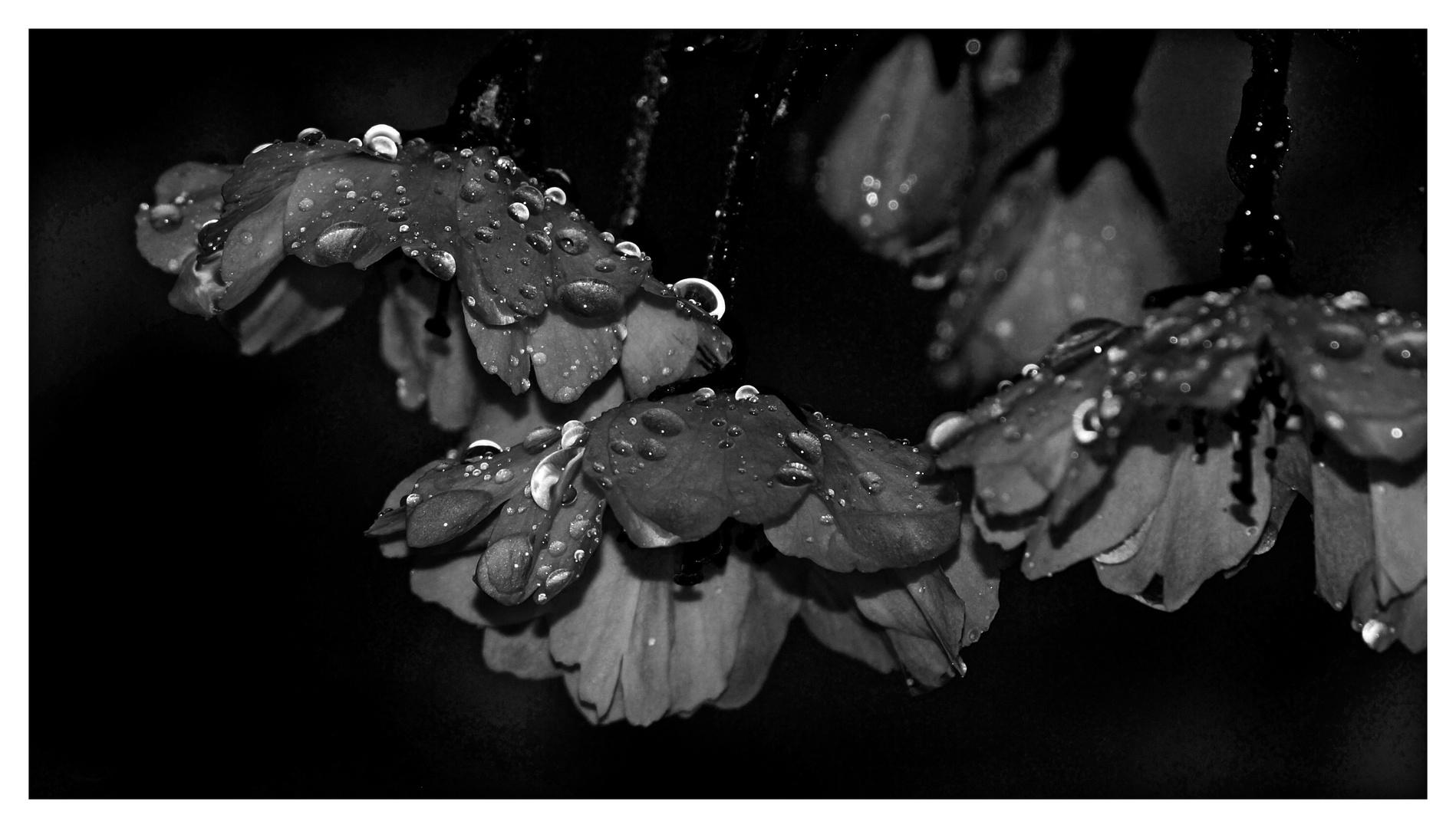 It´s raining ..